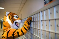 Thomas the Tiger checks his mail